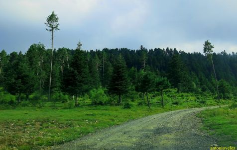 Sierra de Montgrony-Gerona